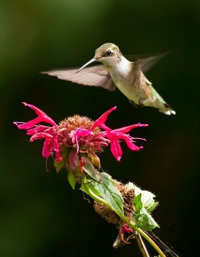hummingbird with flower