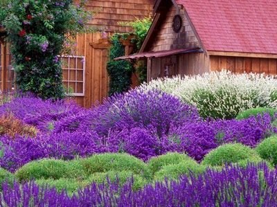 Purple flowers have long been associated with royalty, pride, and luxury.