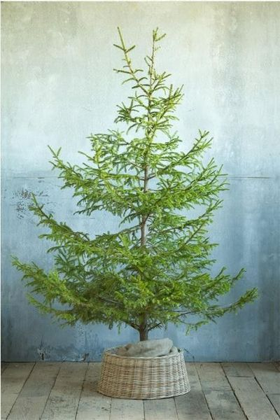 pretty natural christmas tree and wicker tree skirt - Natural Christmas Tree
