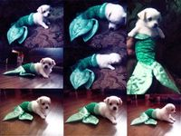 mermaid puppy!