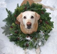 Wreath Dog