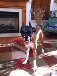 Batman dog!