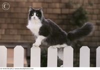 Fences are a meaningless obstacle to a cat.