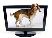 Latest Dog Craze: Dog TV