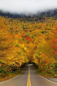 Autumn tree tunnel, Smuggler's Notch State Park, Vermont