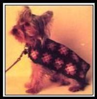 "Granny Squares �€"" Crochet A Coat for A Little Dog"