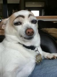 Lmao Bored? Draw eyebrows on your dog and laugh until his next bath..