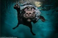 one of my favorite underwater dog pics!