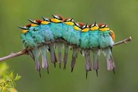 This isn't a colorful caterpillar.