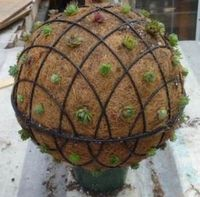 Take two wire baskets with cocoa fiber liners, fill with planting mix and top with a piece of plywood or metal, wire together, poke holes with a stick and fill with succulents. You can secure them in a terra-cotta pot or hang from a chain. Super pretty.