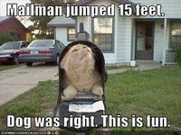 Scared the mailman!