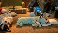 Puppies in pajamas (From Reddit)