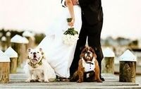 I Love English bulldogs. I will have one some day.. And if it before I get hitched I would SO do a picture like this