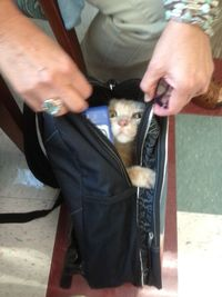 My friend's mom is an elementary school teacher. One of her students told her that he brought his cat to school, but she didn't believe him until he opened his backpack. - Imgur