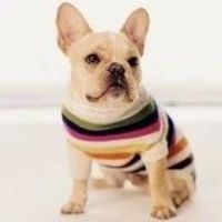 Prevent doggy shivers with this cute little sweater! #luxurydog #dog #dogclothes