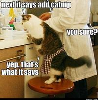 Add Catnip, please.