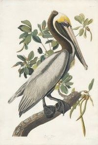 John James Audubon print