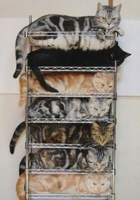 Cats on Cats on Cats!