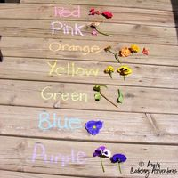 A fun counting and color identification activity with flowers. Can't wait to try this. From Amy's Cooking Adventures.
