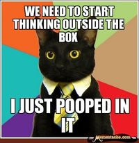 Business cat doles out helpful advice to his co-workers