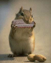 "I think he's playing the ""mouse organ"" lol"